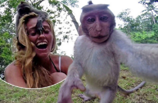 monkey in Bali took a selfie