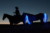 Tail-Lights-LED-Strips-For-Your-Horse-s-Tail