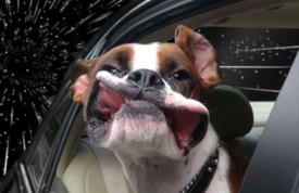 warp-speed-dog-frogman